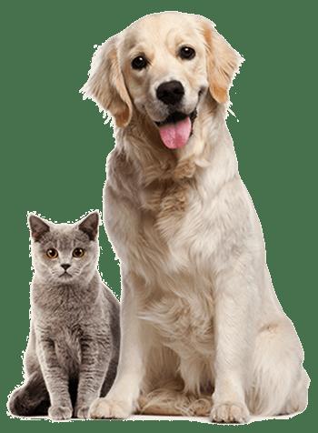 Tierarzt Hannover Online Sprechstunde